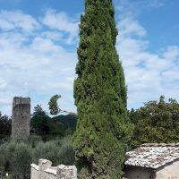 cypress-2644165_1280