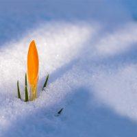 spring-awakening-3132112_1280